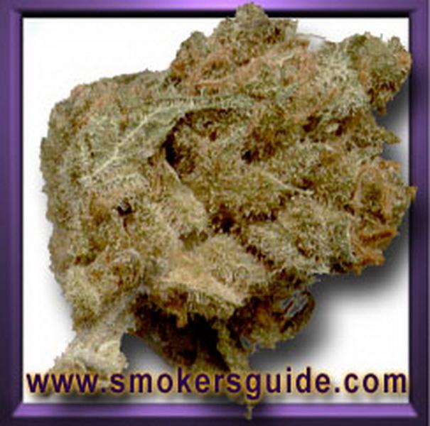Miami Haze Weed Revuew