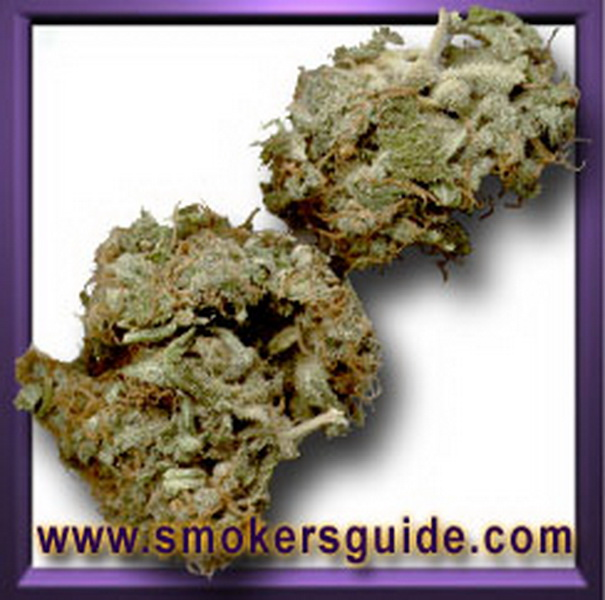 The Rookies - Marijuana - Purchased From Rookies
