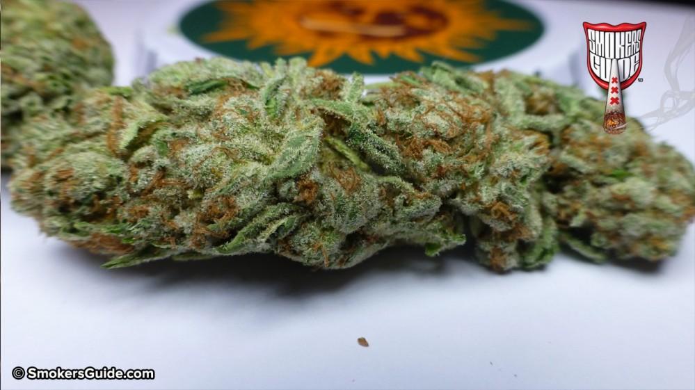 cookies kush   marijuana   purchased from barney s farm