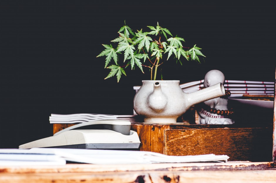 From Outlaw to Houseplant - Can There be Windowsill Cannabis?