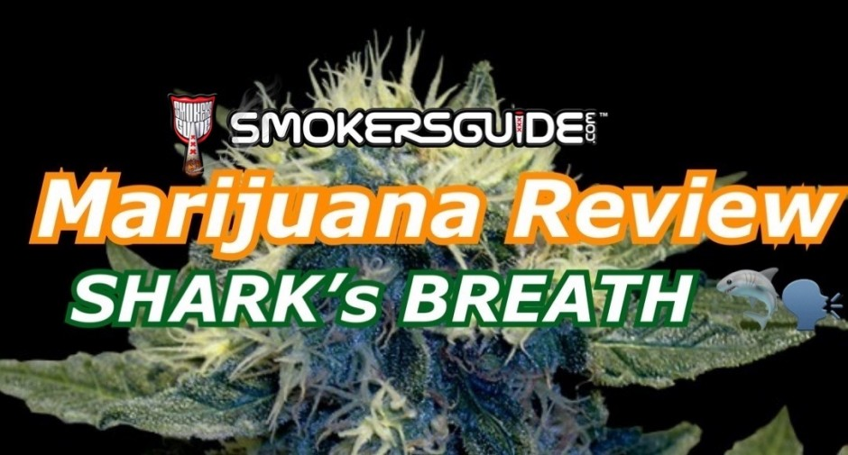 BushDoc Marijuana Review: SHARK