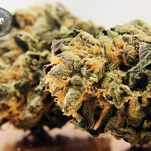 barbary coast ThinMint 60 flower
