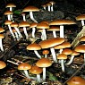 Can Magic Mushrooms Cure Depression