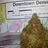Denver Cannabis Cup 2015 Results / Winners