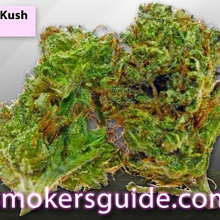 SG Flower Bomb Kush-GreenHouse-M