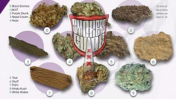 How To Find The Best Weed In Amsterdam The Smokers Guide